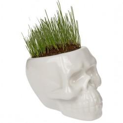 Ceramic Skull flowerpot